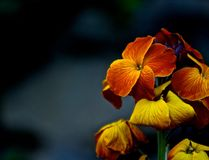 Markotny kwiat Zdjęcia Stock