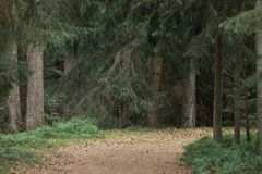 Markotny lasowy ślad zdjęcia royalty free