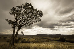 Markotny niebo Zdjęcie Stock