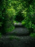 Markotny sposób w lesie obraz royalty free