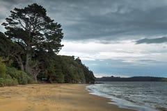 Markotny widok plaża Burz chmury nad chlupot fala i conifer drzewami zdjęcie stock