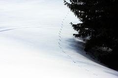 Marks in the fresh snow Royalty Free Stock Image