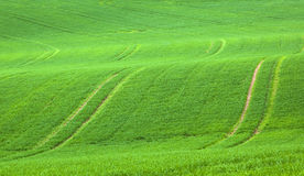 Marks in the green field Royalty Free Stock Photography