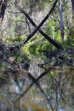 Marks X la tache en nature Photos stock