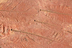 Marks of leaf on the concrete pavement. Royalty Free Stock Photo