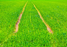 Marks of wheels in green field Royalty Free Stock Photography