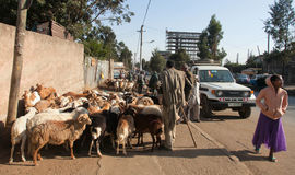 Markttiere in Äthiopien Stockbild