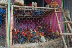 Markttiere in Äthiopien Stockfotografie