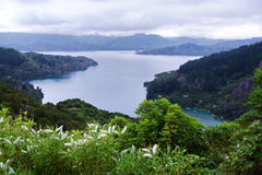 Marlborough Sound with hebe in the foreground. Marlborough sound with wild hebe in the foreground, taken from the Queen Charlotte track Stock Photography