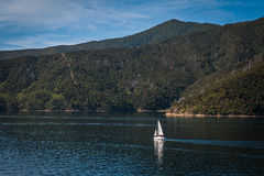 Marlborough Sounds seen from ferry from Wellington to Picton, New Zealand Stock Images