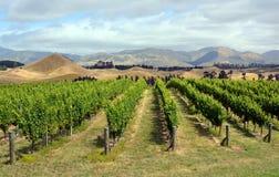 Marlborough vingård i mitt- sommar, Nya Zeeland Arkivbilder