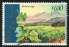 Marlborough vingårdar arkivfoto