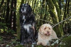 Marley и Lilly стоковая фотография rf