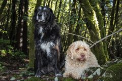 Marley and Lilly royalty free stock photography