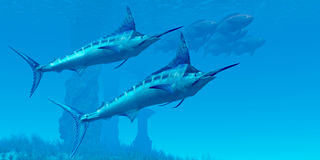 Marlin 02. Two sleek Blue Marlins swim close to a school of fish near some ocean ruins Royalty Free Stock Photo