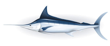 Marlin. Illustration of fish, isolated on the white Royalty Free Stock Photo