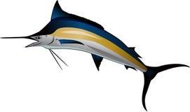 Marlin Stock Image