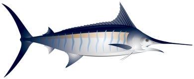 Marlin. Ocean fish vector illustration, Atlantic blue , Makaira nigricans, sporting fishing in the tropical seas Stock Photography