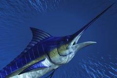 Marlin Royalty Free Stock Photography