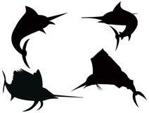 Marlin azzurro e pesce vela del Pacifico Fotografia Stock Libera da Diritti