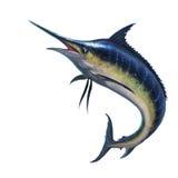 Marlin azzurro su un fondo bianco Fotografie Stock Libere da Diritti