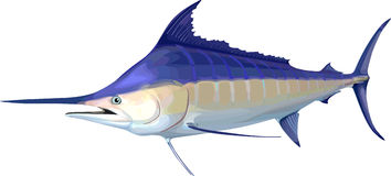 Marlin Stock Images