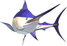 Marlin Stock Photo