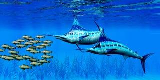 Marlin and Bocaccio Rockfish. Predatory Blue Marlin fish hunt a school of Bocaccio Rockfish over a kelp bed on the ocean floor Royalty Free Stock Photos