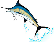 Marlin fish Royalty Free Stock Images