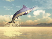 Marlin fish jump - 3D render. Marlin fish jumping by sunset - 3D render Royalty Free Stock Photography