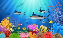 Marlin Fish Swimming Under Water azul Fotos de archivo