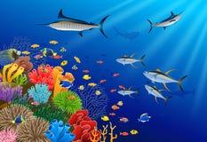 Marlin Fish Swimming Under Water azul libre illustration