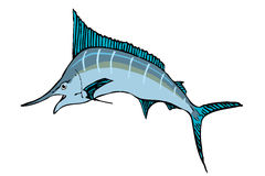 Marlin fish Stock Image