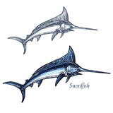 Marlin fish vector isolated sketch icon Stock Images