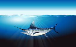Marlin Stock Photography