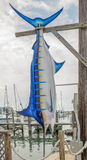 Marlin Sailfish blu Fotografia Stock