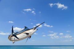 Marlin - Swordfish,Sailfish saltwater fish (Istiophorus) isolate. D on sea and sky background stock photos