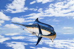 Marlin - Swordfish,Sailfish saltwater fish (Istiophorus) isolate. D on  sky background with water reflex Stock Image