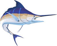 Marlin stock illustration