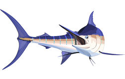 Marlin Stock Photos