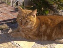 Marmalade Cata on the Burriana Beach in Nerja Andalucia Spain stock photo
