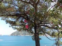 Perfect view, Marmaris royalty free stock photo