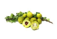 Marmelo com uma folha verde Imagens de Stock Royalty Free