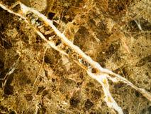 marmor Unik brun marmortextur för perspektiv Abstrakt naturlig sömlös brun marmorbakgrund Arkivfoto