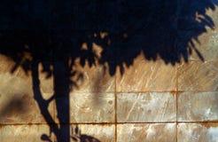 Marmorbakgrundsmodell med mörk trädskugga Royaltyfria Bilder
