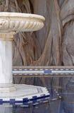 Marmorbrunnen und alter hundertjähriger Ficus Stockbild
