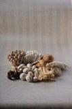 marmoreus Στοκ Εικόνες