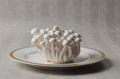 Marmoreus. The Mushrooms isolated on a  wallpaper background Stock Images