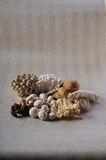 Marmoreus. The Mushrooms isolated on a  wallpaper background Stock Photo