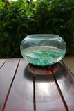 Marmorexponeringsglas i fishbowl Royaltyfria Bilder